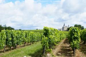 Bordeaux wijngaarden - Foto: (c) Samuel Rosa