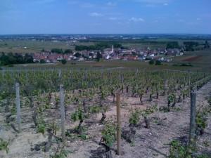 Une parcelle de Pommard 1er Cru Les Rugiens (foto: www.kvins.com)
